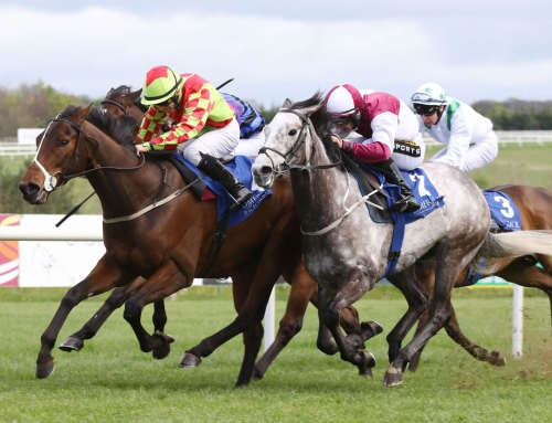 Replacement Flat Fixture at Limerick on Monday 3rd October 2016